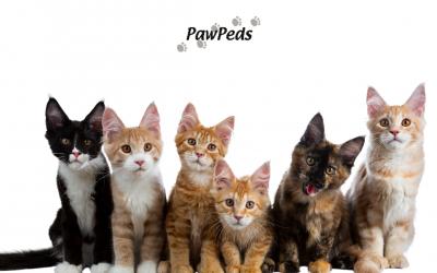 ➤ Qué es Pawpeds